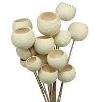 Bell Cup Mix on a stick bleached 15pcs