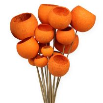 Bell Cup Mix on a stick orange 15pcs