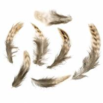 Feathers natural 4.5 - 9cm 20g
