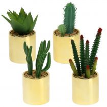 Cactus green in the golden pot 12cm - 17cm 4pcs