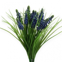 Grape hyacinths 28cm - 30cm blue 5pcs