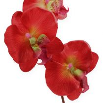 Decorative orchid red 68cm