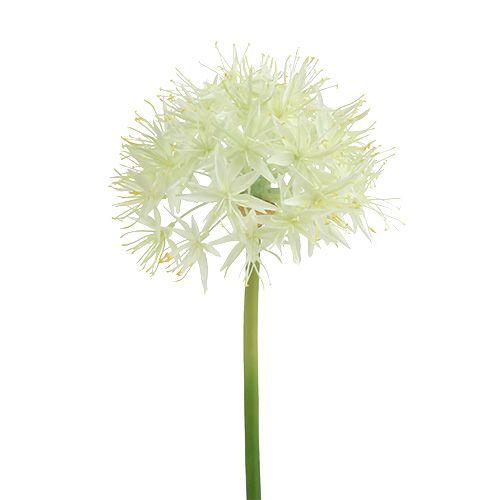 Allium cream white L76cm