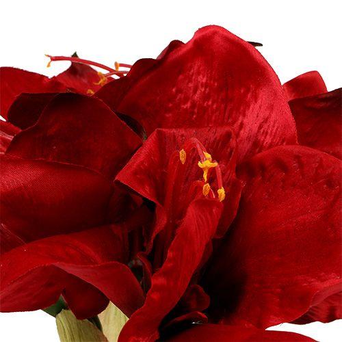 Amaryllis Red L 73cm 2pcs