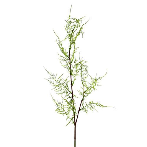 Asparagus branch 75cm green 3pcs