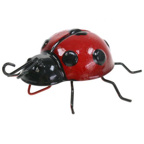 Ladybug 10cm