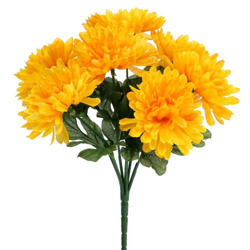 Chrysanthemum yellow with 7 flowers