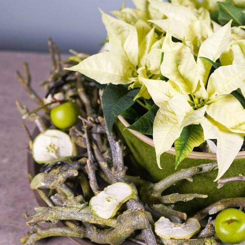 Deco branch Curry bush Green washed 500g