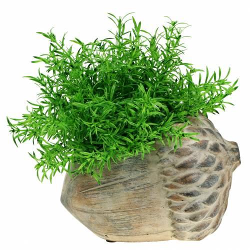 Planter concrete acorn 21.5cm × 14cm H9.5cm