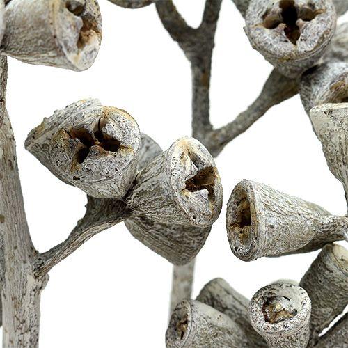 Eucalyptus branch whitewashed 25pcs