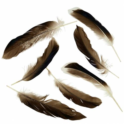 Natural Feathers 150pcs