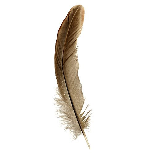 Feathers Brown Spotted 14-16cm 45g