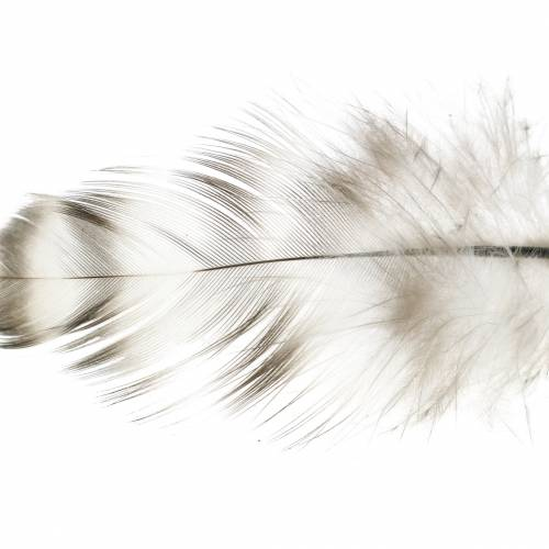 Natural feathers 5.5 - 10cm 10g