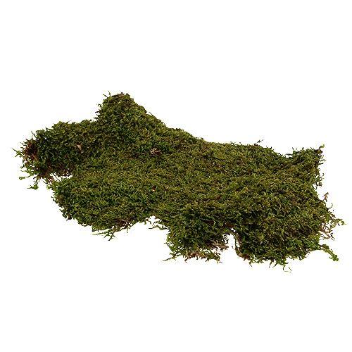 Forest Moss Natural Green 2kg