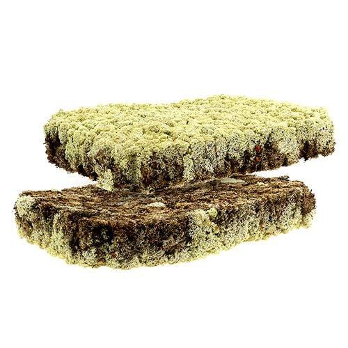 Moss reindeer moss Finnish Prima Plus 2 plates
