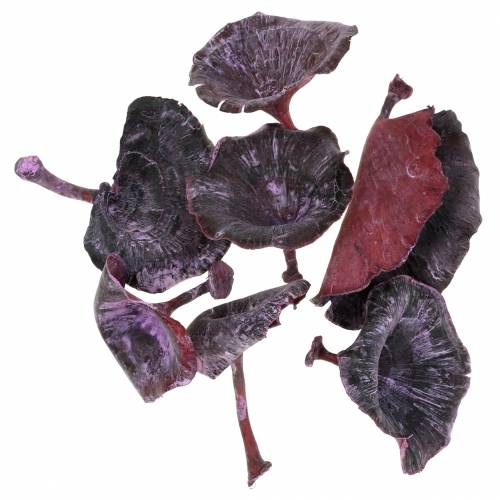 Kalix mushroom lilac, white washed 100pcs