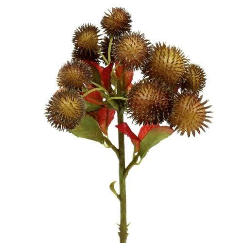 Chestnut pick brown 32cm