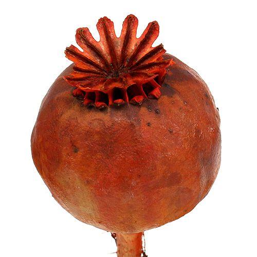 Poppy heads dyed orange 100p