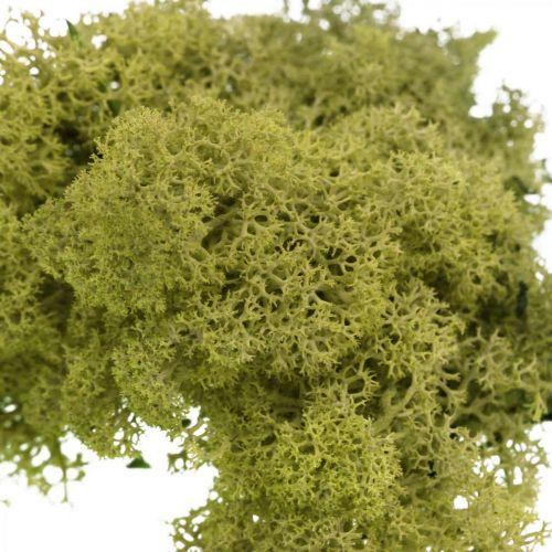 Decorative moss for handicrafts Light green natural moss preserved 40g