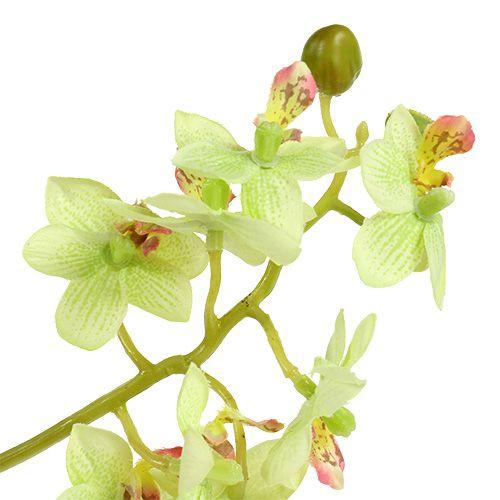 Orchid 97cm light green