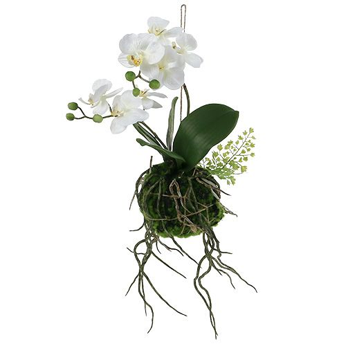 Orchid Phalaenopsis to hanging H33cm cream