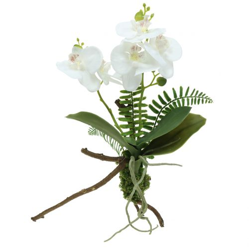 Orchid white with mossballs and roots 36cm