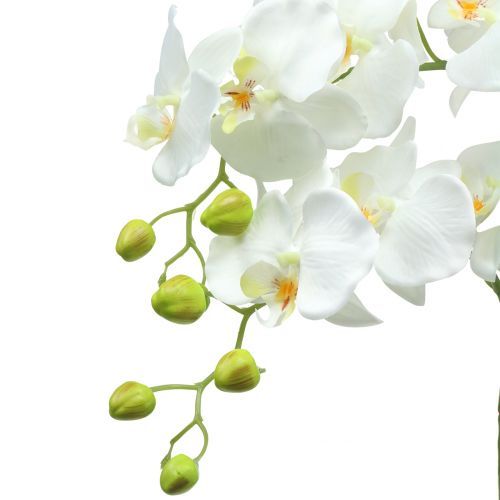 Orchid white on ball of earth 65cm