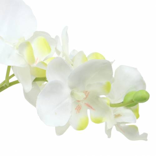 Orchids white in pot H35cm