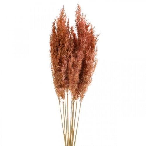 Pampas grass dried pink dry flowers 75cm bundle of 10pcs