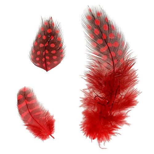Guinea Feathers Faraona 30g Red