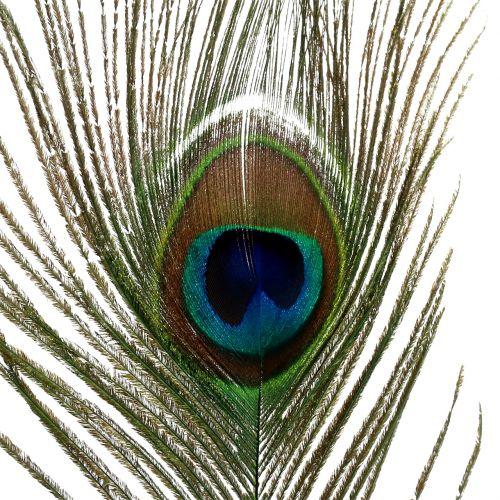 Peacock feathers 22cm - 30.5cm 12pcs
