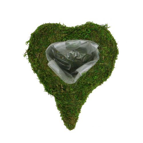 Plant Heart Moss 23cm x 19cm