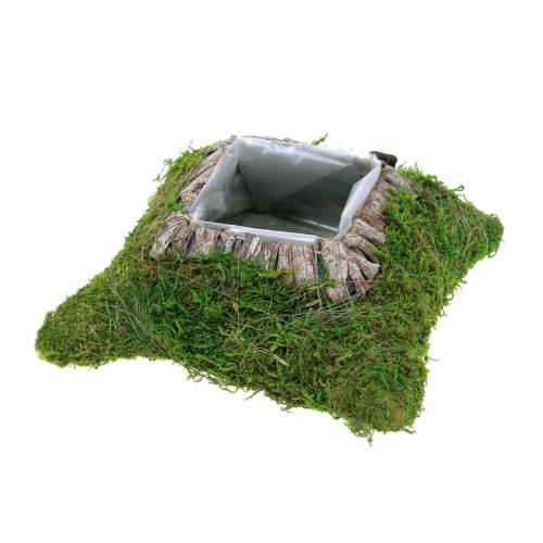 Plant cushion moss, bark 20cm × 20cm