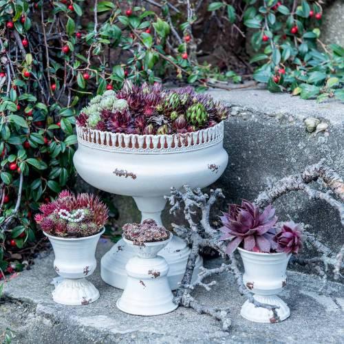 Planting Cup Chalice Antique Cream Ø7.5cm H9cm 1p