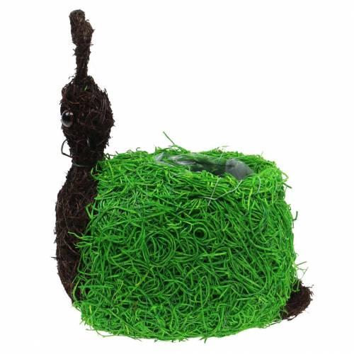 Planter snail vine natural, green 21x14cm H26cm