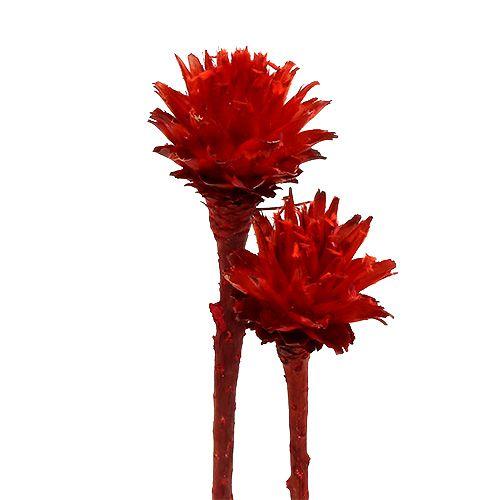 Plumosum 1 red 25pcs