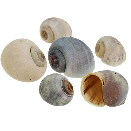 Snail shell natural 1kg