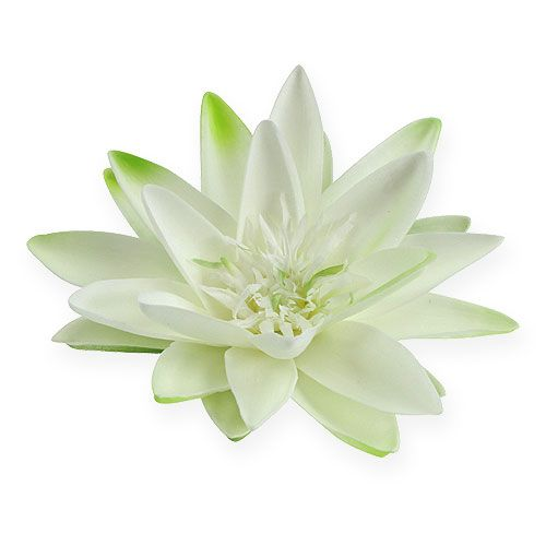 Water lily floating cream Ø20cm