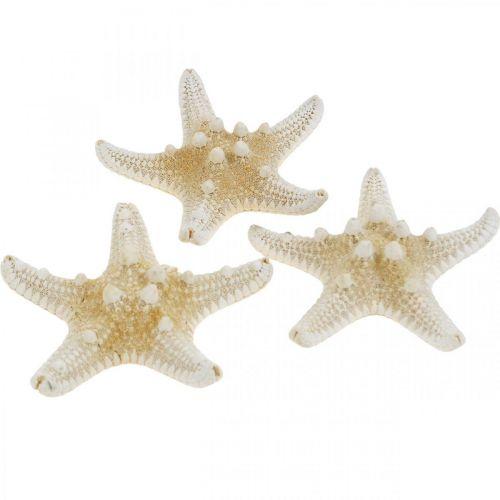 Starfish Nature Maritime Table Decoration 5-8cm Real Starfish 20pcs