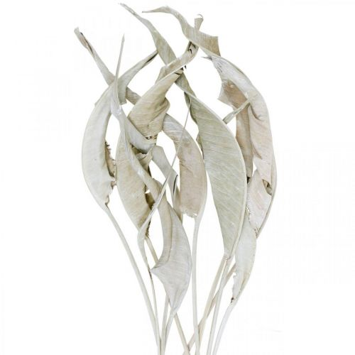 Strelitzia leaves washed white dried 45-80cm 10pcs