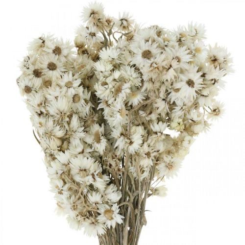 Everlasting Flowers Dried Flowers Bouquet White Small 15g