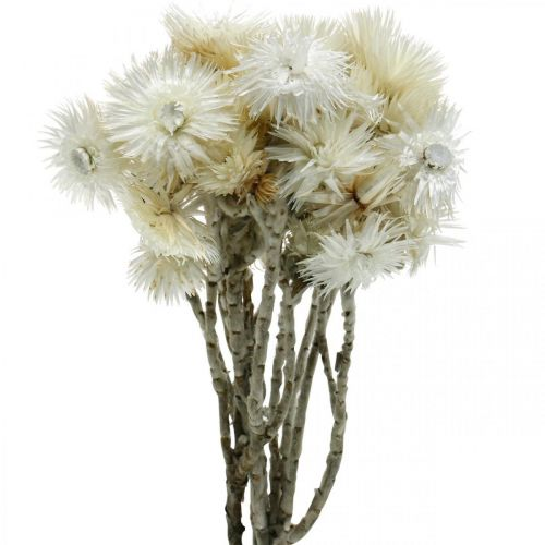 Dried flowers Cap flowers natural white, everlasting flowers, dried flowers bouquet H33cm
