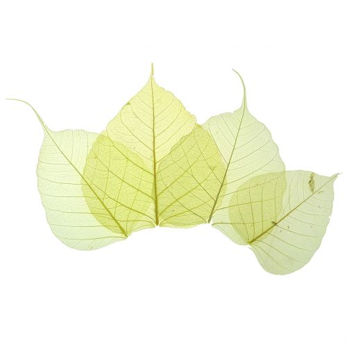 Willow Leaves Skeletonized Yellow Mix 200pcs