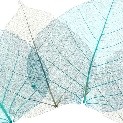 Willow leaves skeletonized gray, turquoise 200pcs