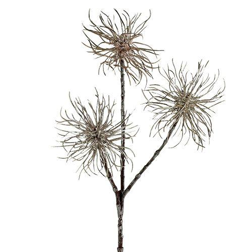Witch hazel branch champagne 45cm 3pcs
