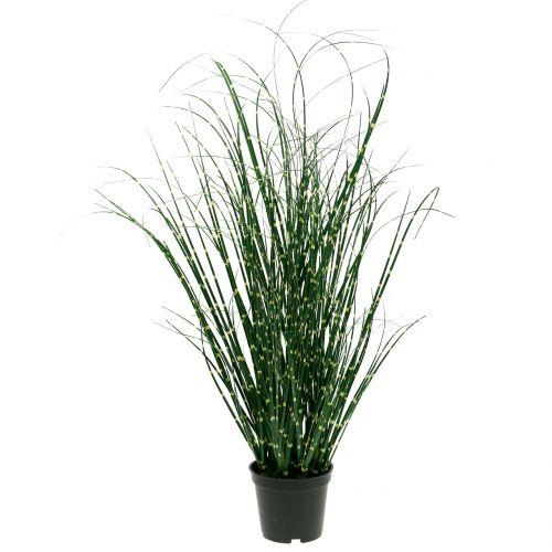 Zebra grass in a pot green 60cm