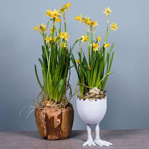 Flower Pot Camphor Burl Wood Ø20cm H17cm