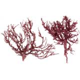Coral branch red white washed 500g