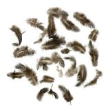 Guinea fowl feathers 20g light brown