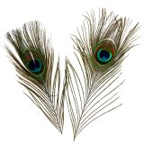Peacock feathers 22cm - 30.5cm 12pcs